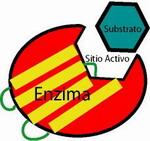 Acción enzimática
